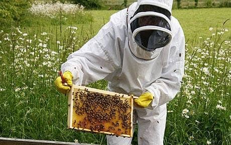 24/06/08  Bee Keeping Course At Littlecote House In Berkshire.Teresa Machan And Steve Conway Are Shown The Hives By Bee Keeper Rosemary Proud (upright Head Protector) At Her Property Near Lambourn, Berkshire.Picture: John Lawrence 07850 429934