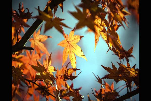 Autumn Leaves 1415541 1920 (Copy)