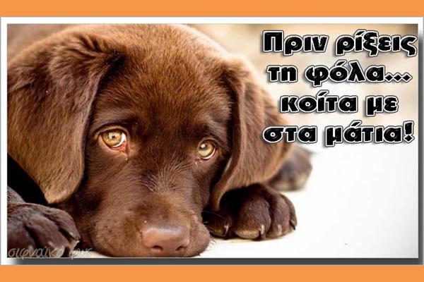 Fola Dogs (Copy)